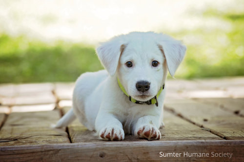 Sumter Humane Society